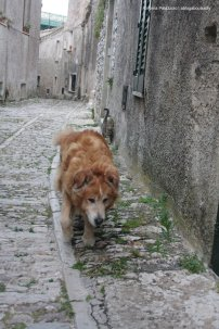 Strange walking friends in Erice